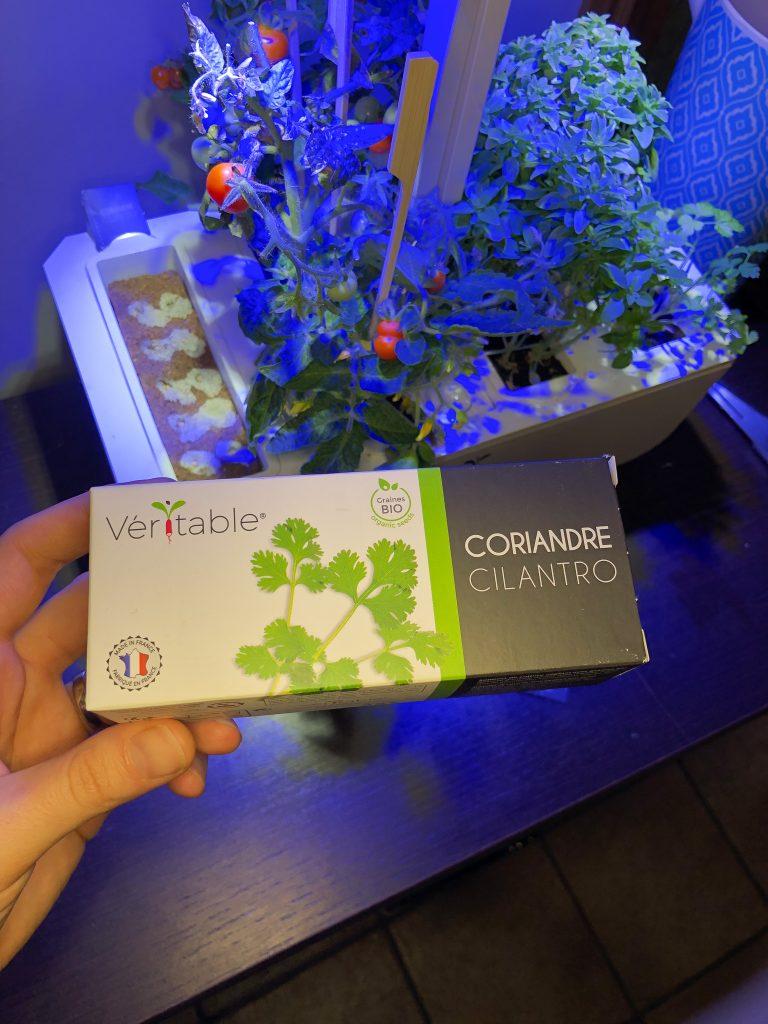 potager veritable garden herbes aromatiques coriandre
