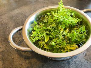 potager veritable garden herbes aromatiques basilic