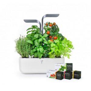 potager veritable garden herbes aromatiques